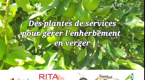 film13plantesdeservicesenvergers_film13.png