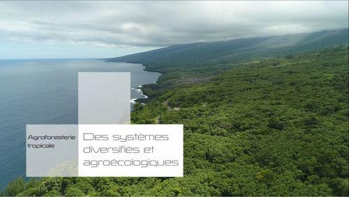 filmdesrencontresagroecodommayottereunion2_image-film-agroforesterie.jpg