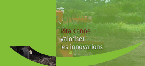 leritacannealareunioncestquoi_rita-canne-illustration-video.png