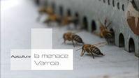 liseenlignedesvideosdesrencontresagroeco_image-film-apiculture-varroa.jpg