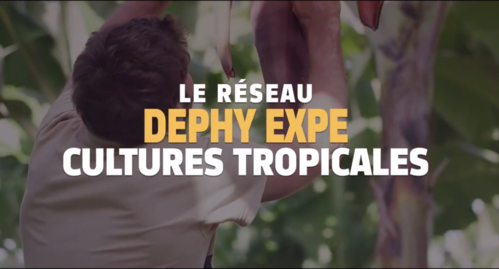 reseaudephyexpeenfilierestropicales20182_capture-dephy.png