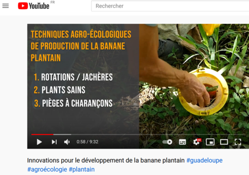 videoprojetintensecoplantain2_2021-06-28-6-.png